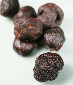Truffle - Thế giới nấm