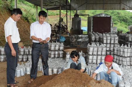 nghề nấm, trồng nấm