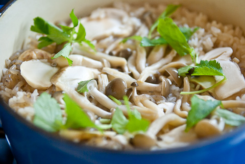 matsutake mushroom japan